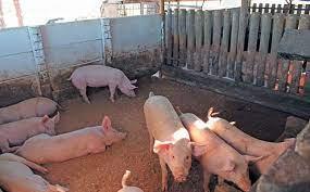 Pig Structure Construction